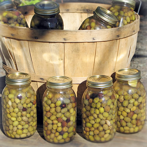Organic homemade olives.