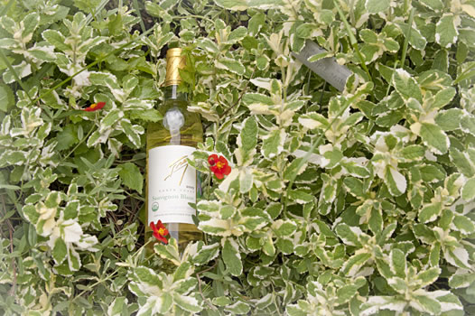 Bottle of Frey Organic Wine in bed of herbs