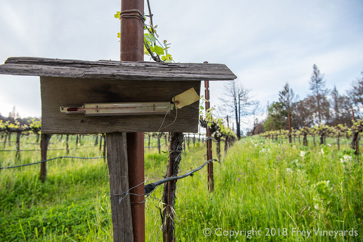Thermostate used to check risk of frost in the vineyard