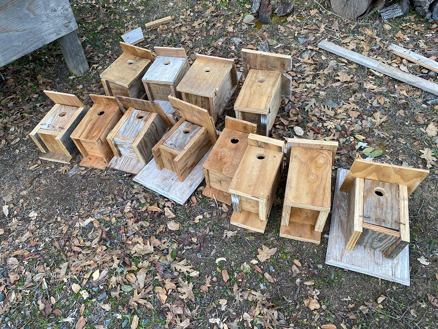 Freshly made birdhouses ready to set up