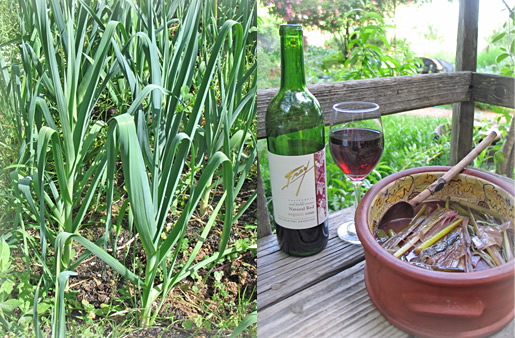 Leeks in the garden, then cooked with Frey Organic red wine