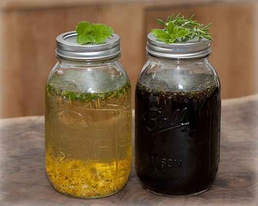 Jars full of organic wine and herbs for infusion